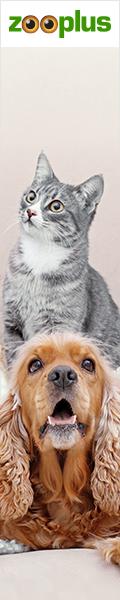 Katzenshop Übersicht